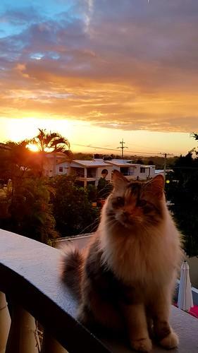 cat 2018 chat dominicanrepublic sunrise animal