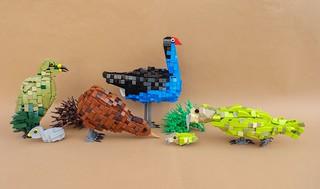 New Zealand Birds   by -Balbo-