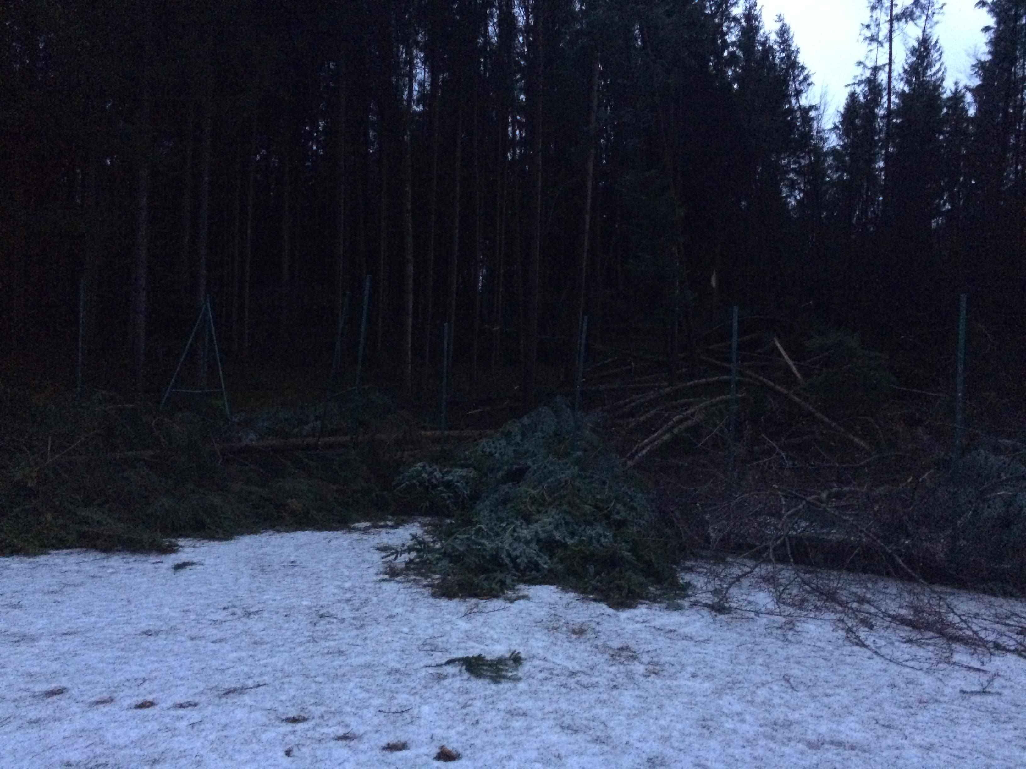 Sturmschaden Jänner 2018