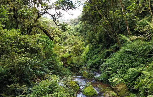 Nyungwe Forest NP