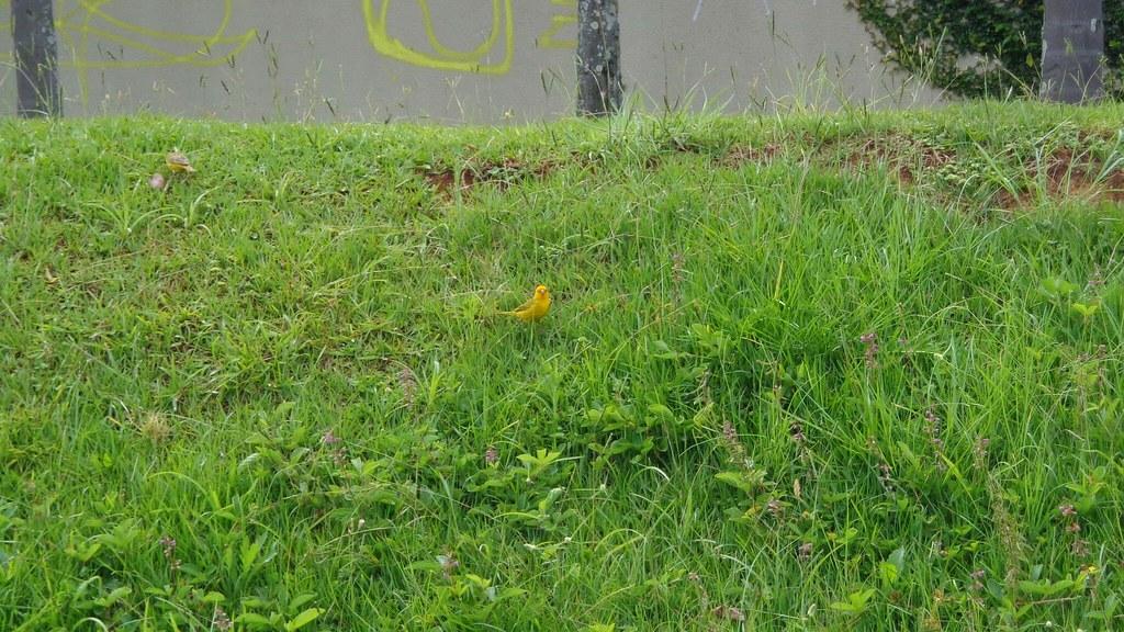 Parque Barigui 3