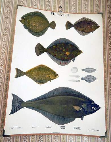 Fish poster at our Grebbestad B&B in Sweden