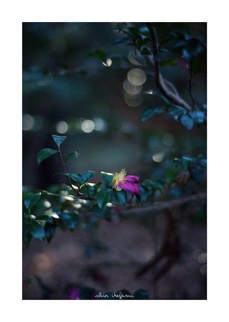 2019/1/5 - 7/18 photo by shin ikegami. - SONY ILCE‑7M2 / Carl Zeiss C Sonnar T* 1.5/50 ZM
