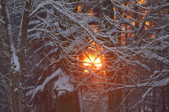 Зимние пейзажи Гатчины, январь 2019