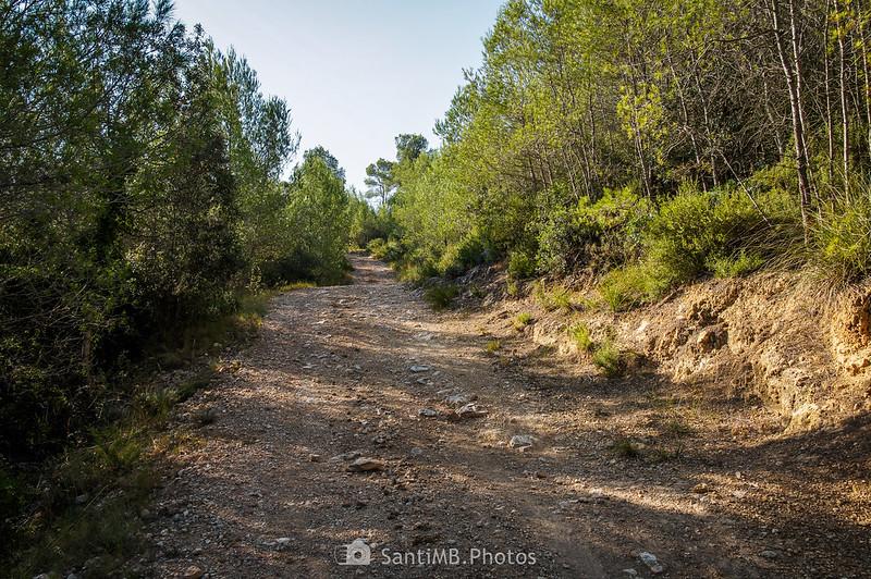 Camino hacia el Turó de la Roqueta