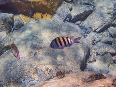 DCL March 2019 Tortola Underwater-73-2.jpg