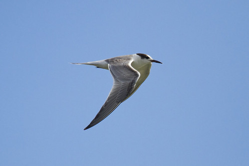 october2018 commontern