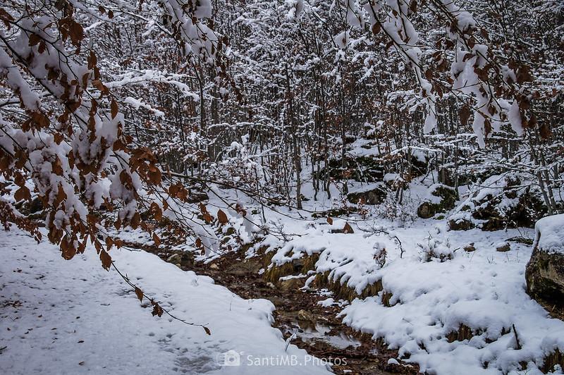 Nieve fundiéndose en el camino al Espitau de Vielha en el Bòsc de Conangles