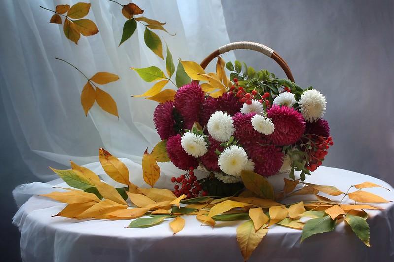 Обои осень, листья, рябина, астры картинки на рабочий стол, раздел цветы - скачать