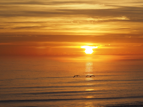 sunrise newsmyrnabeach florida birds pelicans atlantic ocean