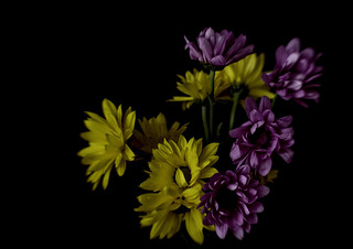Bouquet of Daisies | by smfmi