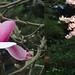 """""""des fleurs ça fait plaisir"""" She says by Pierre♪ à ♪VanCouver"""