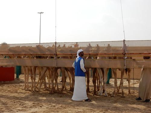 Al Marmoom Camel Racing Track - 4