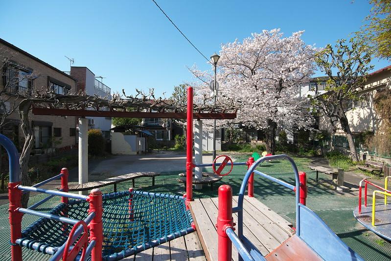 西尾久一丁目児童遊園の桜