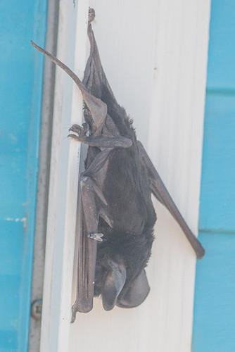 bat | by steve happ