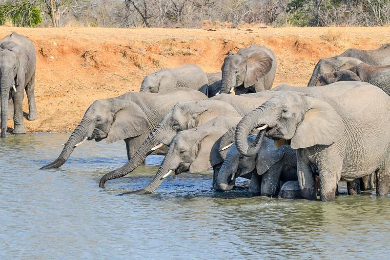 2300 Elephant