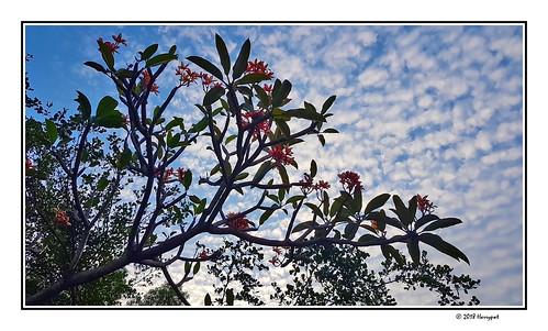 harrypwt samsungs7 s7 smartphone africa nigeria abuja borders framed tree