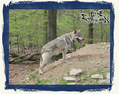 And_Out_Come_The_Wolfes-11-12-39 AM-