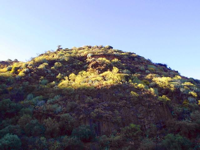 Barranco de los Cernicalos II