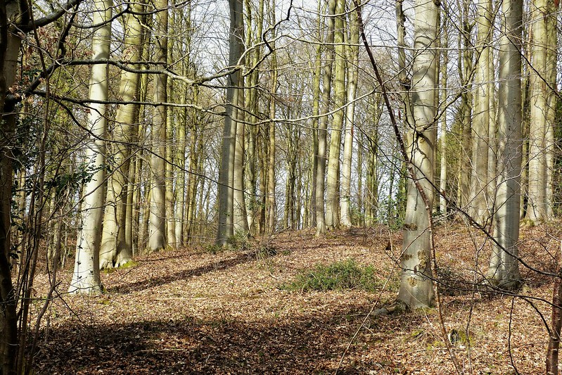 Haugh Wood