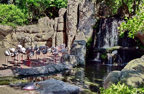 Resting Flamingos | by gerard eder