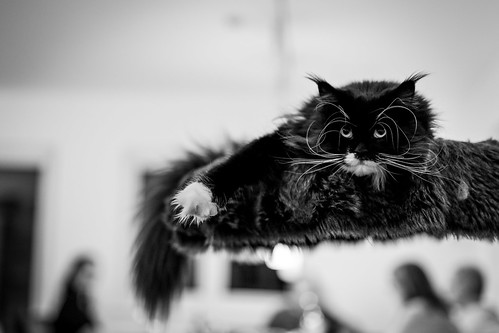 012 - cats cats cats- A9506383 | by NEX69