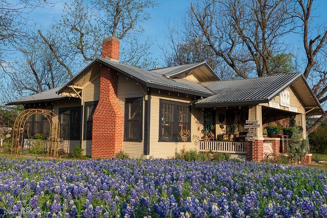 Bluebonnets Leander Texas