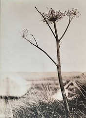 The Joy of Spring, lith print