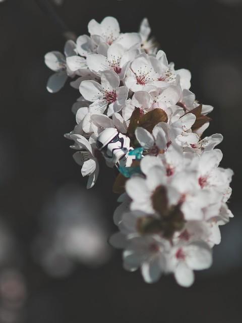 Kirschblütentrooper