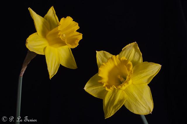 Narcisse 06