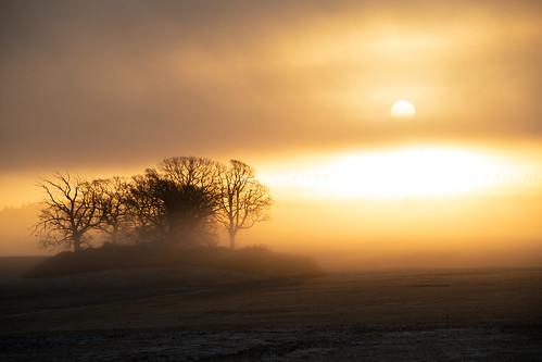 fog light sun sunrise snow frost
