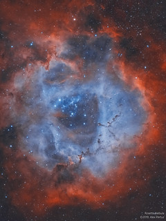 Rosette Nebula - Bicolor