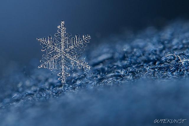 Mi, 2017-01-25 11:15 - ~Schneeflocken~ bergen, wenn man genau hinschaut, ein wunderschönes Geheimnis: die Schneekristalle! Sie haben allesamt sechseckige Formen, wobei keine der anderen gleicht. Dieses Foto zeigt einen solchen Schneekristall mit einer Größe von etwa 2 – 3 mm.  Schneekristalle bilden sich, wenn hoch oben über der Erdoberfläche Temperaturen von – 12 °C und weniger herrschen. Auf dem Weg zur Erde wachsen die Kristalle an, schließen sich zu Schneeflocken zusammen und schweben langsam zu Boden.  Vor drei Tagen kamen hier wirklich endlich mal wieder schöne Schneekristalle vom Himmel - die Chance habe ich genutzt! Focus Stack, freihändig. Es soll ja demnächst wieder kälter werden... ;-)  ***Wie man sie am besten fotografieren kann, habe ich in Ausgabe 2 von MAKROFOTO beschrieben***