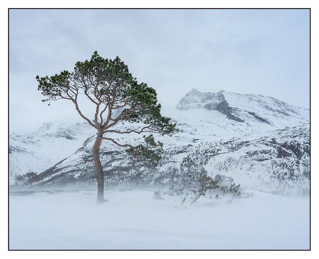 Windswept Norway.