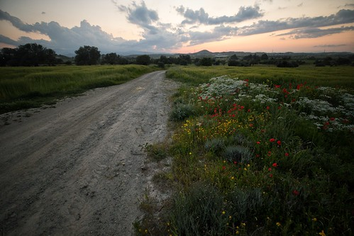 Field with Poppies (61) | by Polis Poliviou