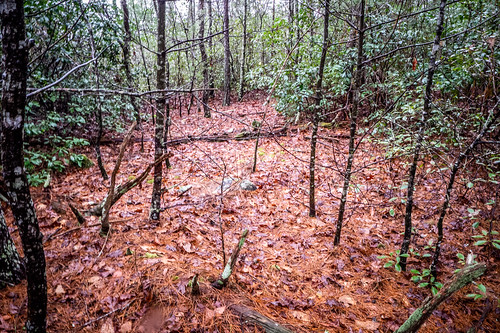Tall Pines Preserve and South Saluda Church Cemetery-32 | by RandomConnections