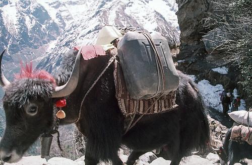 Everest_0076.jpg