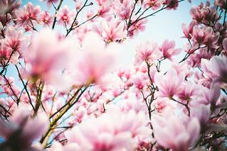 Blütenrausch | by Bluna0815