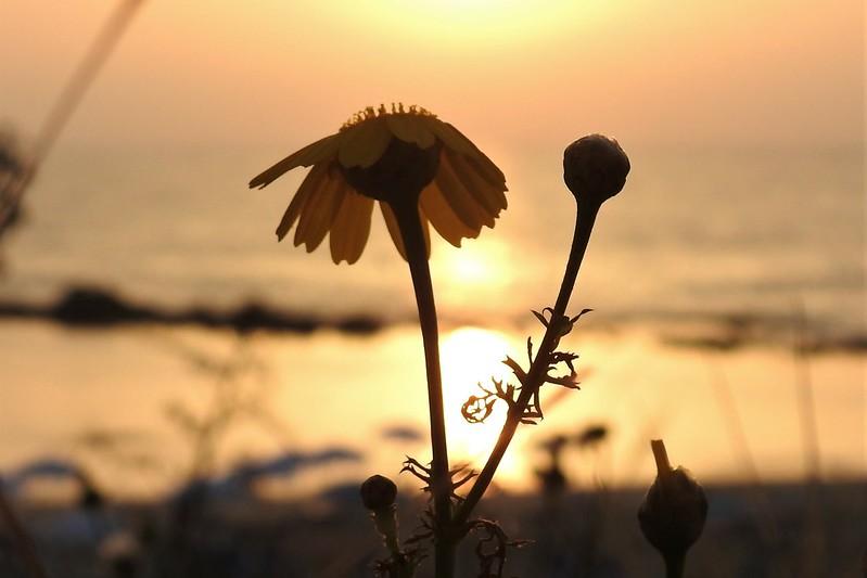 В сиянии солнца
