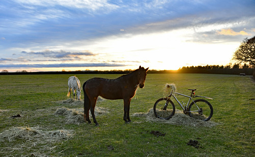 horses lynskeyridgeline29er sunset hay bike oxfordshire nikond850 nikonafszoom28300mmf3556