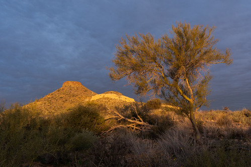 brownsranch brownsranchroad brownsmountain foothillpaloverde tree sunrise clouds