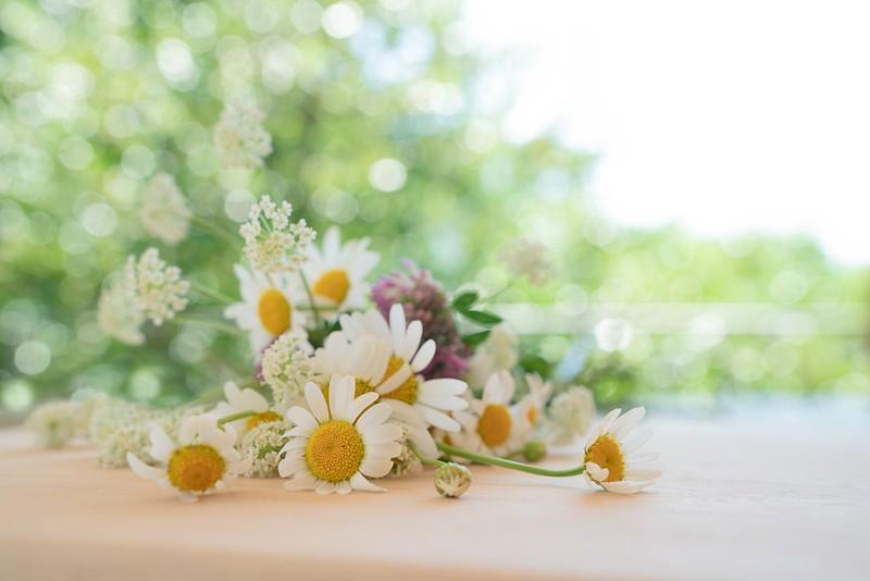 Обои лето, блики, ромашки, клевер, боке картинки на рабочий стол, раздел цветы - скачать