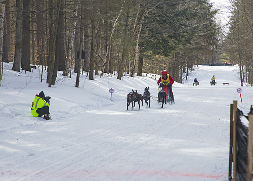 dogs dog sled sledding race racing snow tug hill canon 2019 friends fun family life outdoors woodland dogsled dogsledracing tughillchallenge