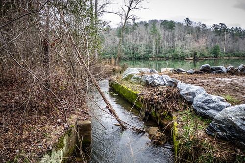Tall Pines Preserve and South Saluda Church Cemetery-100   by RandomConnections