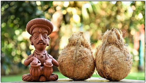 Yield - First two coconuts of our backyard garden | by Ramalakshmi Rajan