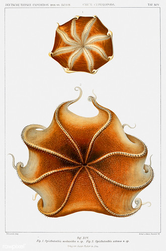 Red flapjack octopus vintage poster | by Free Public Domain Illustrations by rawpixel