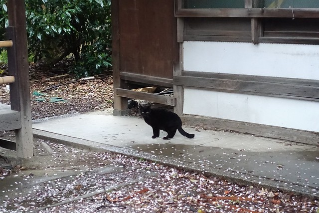 Today's Cat@2019-04-10