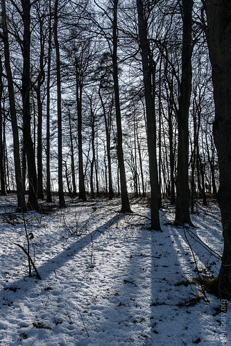 Sydlings Copse   by FlickrDelusions