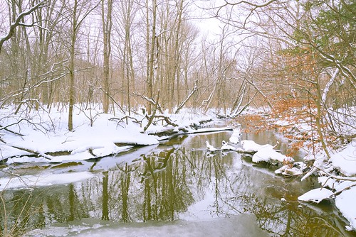 winter woods wetlands reflections river creek snow