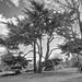 Kew Gardens - Monochrome